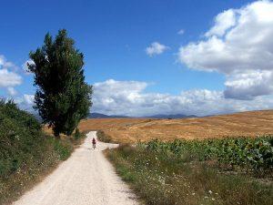 Migliori Libri Cammino di Santiago