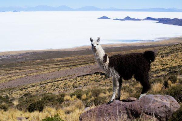 Migliori guide di viaggio per il Sud America