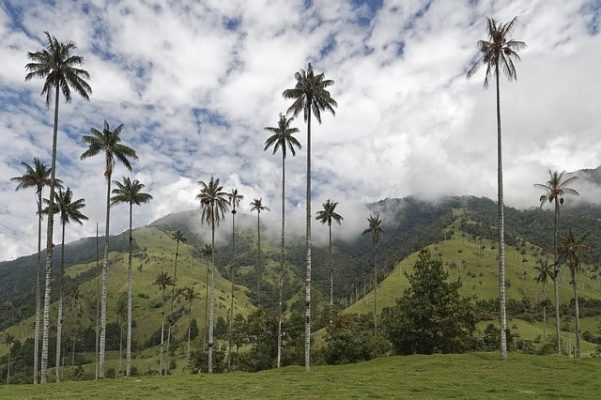 Colombia Valle del Cocora, Slow Moove blog di Viaggi