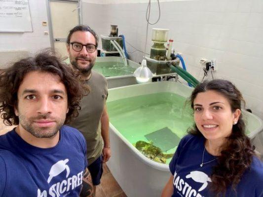 Iniziativa recupero tartarughe - Slow Moove blog di viaggi